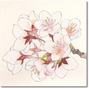 桜の描き方