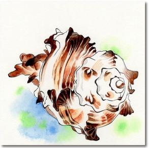 貝の描き方